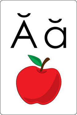 Alphabet Flash Cards - An Ant - Learn to Read